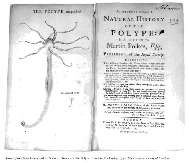 Natural History of The Polype