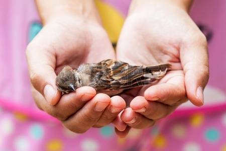 58671443-woman-holding-a-dead-bird-in-her-hands