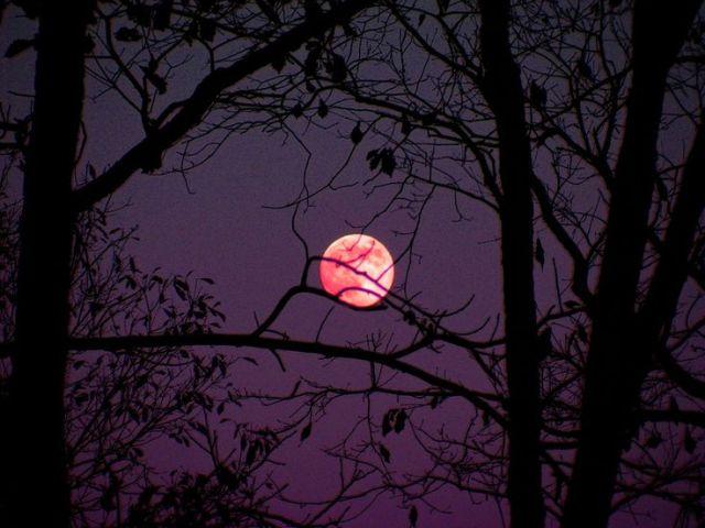 fc1e83338aa5b9ef93c45eef68b28cea--full-moon-aesthetic-gothic-aesthetic
